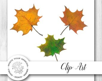 Watercolor Clipart - Fall Leaves - Red, Gold, Green, Instant Download, Handpainted, Detailed Artwork