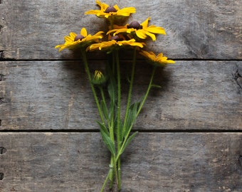 Rudbeckia, organic heirloom seeds, flower seeds from our farmstead, eco friendly gardener gift, organic gardening, cottage garden