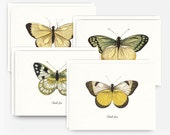 Set of 4 Thank You Note Cards with Antique Butterfly Etchings in Shades of Yellow, Blank Thank You Note Cards, A2 Greeting Cards