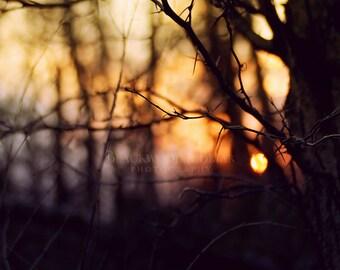 Samhain Woods