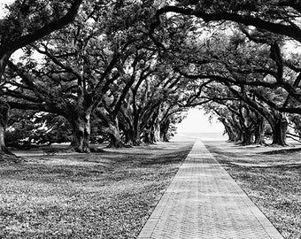 Black and White Print, Live Oak Trees, Louisiana Landscape Photograph, Fine Art Photography, Oak Alley Plantation, Romantic, Antebellum