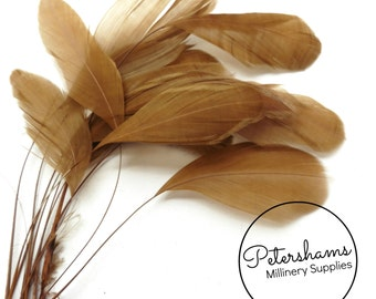 Pack of 12 Loose Stripped Coque Feather for Millinery & Fascinators - Mocha Brown