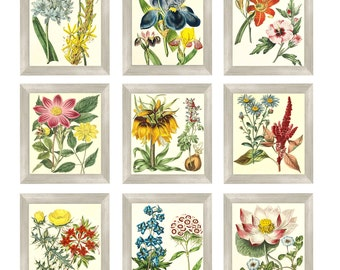 Vintage  flower rare wall art with Instant Download 9-[8x10]  Files Vintage print Botanical Print Antique Botanical Prints  Posters