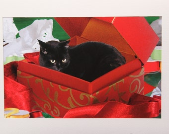 Black Cat in Box Print, Cat Artwork, Giclee Art Print, Cat Lover Gift, Signed Art, Deborah Julian