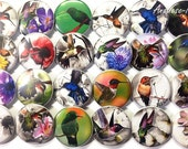"Hummingbird Buttons, 1"" Buttons, 1.5"" Buttons, Hummers, Hummingbirds, Bird Buttons, Party Favors, Hummingbird Pins, Floral, Spring Time"