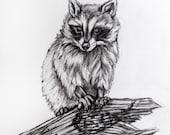Original pencil drawing - Raccoon 7