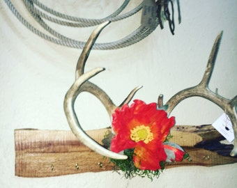 Whitetail antler key/jewelry holder