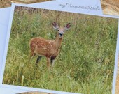 Deer Fawn Photo Note Card. Nature Photography. Montana Wildlife.