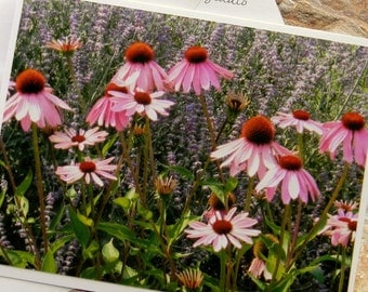 Lovely Array of Flowers Photo Note Card. Nature Photography. Montana. Echinacea. Coneflowers. Pink Flowers Note Card. Wildflowers.