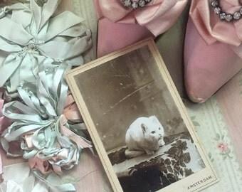 19th Century Antique CDV Card Photograph Photo White CAT On Pretty Coverlet