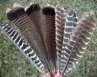Lot of 7 Large Craft Grade Turkey Feathers