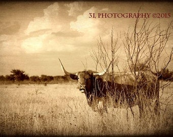 Western Photography Texas Longhorn Cattle Fine Art Photograph Rustic Landscape