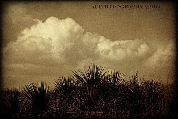 Cactus Cacti Landscape Photo Rustic Photography Western Fine Art Photograph Southwestern Wall Decor