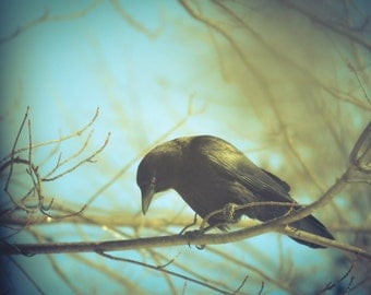 Crow Bird Photography black bird,gothic,Gift idea,dramatic,dark,teal sky,turquoise,raven,goth,winter,crow on turquoise background,rustic