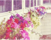 Flower Boxes, Photography Print, 6x9 + More Sizes, Flowers, Purple & Pink, Floral Themes, Images, Gardens, Planters, Wall Art, Home Decor