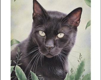 """black cat 8""""x 10"""" art print Mystifying animal feline signed by artist Karen Romine free shipping giclee"""