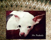 RESERVED Warm Custom Clothes for  Mr. Peabody and Moxie