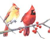 Cardinals print of watercolour painting C7915 - A4 size medium print- Christmas decor