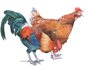 Chicken and Rooster print CR2716. Chicken Rooster watercolor painting print, 5 by 7 size print, farmyard animal watercolor painting
