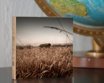 Photography//Tall Grass//Open Sky// Empty//Hidden//Shack//golden grass photoblock