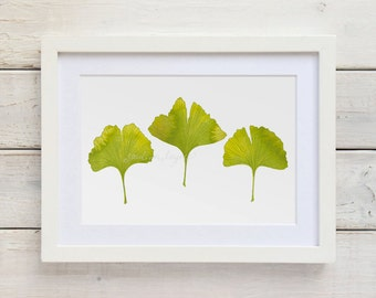 Ginkgo Print, Watercolor Ginkgo Art Print, Watercolor Leaves, Ginkgo Leaf Print, Nature Illustration, 5x7