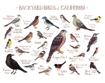 California Backyard Birds Field Guide Art Print / Watercolor Painting / Wall Art / Nature Print / Bird Poster