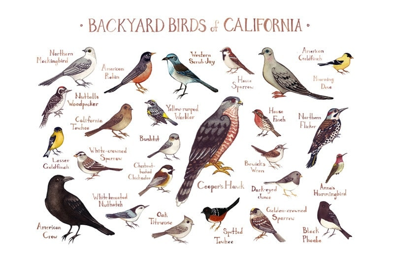 Backyard Birds of California by Kate Dolamore