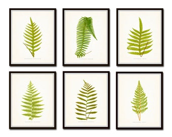 Vintage Ferns Print Set No. 2, Botanical Prints, Giclee, Art Print, Antique Botanical Prints, Fern Prints, Woodland Art, Botanical Art
