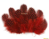 50 Pieces Red Feather 4.5-10cm (YM77)