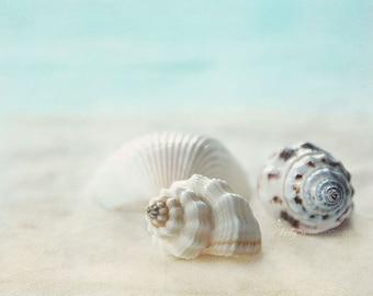 Seashell Photography, Shells Print, Beach Photography, Beach House Decor, Large Wall Art, Sea Shell Print, Aqua Cream, Coastal Wall Art
