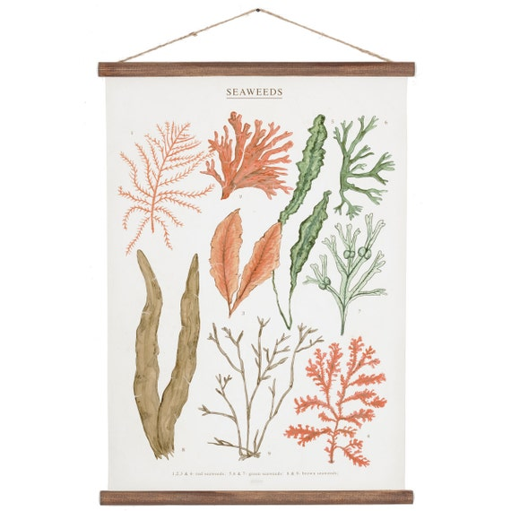 Seaweeds Poster - cotton canvas handmade vintage inspired educational chart illustration ALP2002