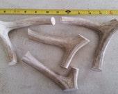 4 natural deer antler pieces pet treat organic decor design real antlers horns sheds crafts