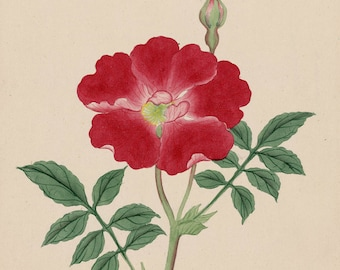 Japanese Art Reproductions. Red Primrose, Purple Thistle, c. 1870s. 2 Fine Art Prints