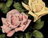 Beautiful Tinted Real Photo Botanical Postcard 1909 Very GOOD Used Condition Pink Yellow And Red Roses