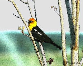 Sale 10 - Yellow-Headed Blackbird Blank Note Cards