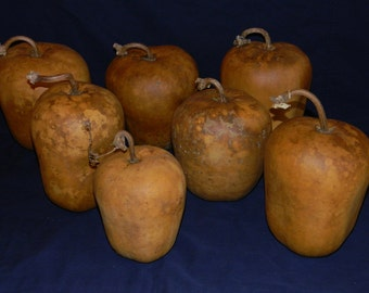 Craft Ready Set of Seven Dried Apple Gourds