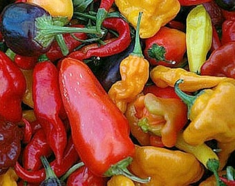 Exotic Hot Chile Pepper Collection, 150 seeds, great gift for gardeners, chili sampler, 6 fierce peppers, Datil, Fish, Thai Pepper, Serrano