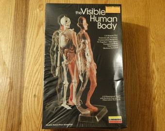 Vintage 1984 The Visible Human Body Skeleton Model Lindberg Sealed Unopened Complete Skull Bones Organs