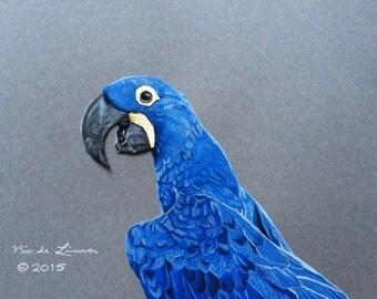 Hyacinth Macaw 8 x 10 Original Colored Pencil Drawing