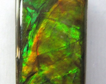 Fossilized Canadian Ammolite Cabochon