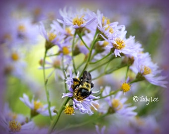 Bees and Flowers Purple Flower Photograph