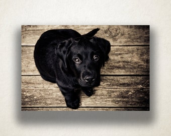 Black Lab Puppy Canvas Art, Dog Wall Art, Animal Canvas Print, Close Up Wall Art, Photograph, Canvas Print, Home Art, Wall Art Canvas