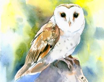 Barn Owl original watercolor painting 12 X 12 in (30 X 30 cm)