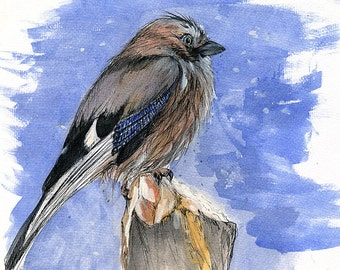 original pen and watercolour painting of a jay