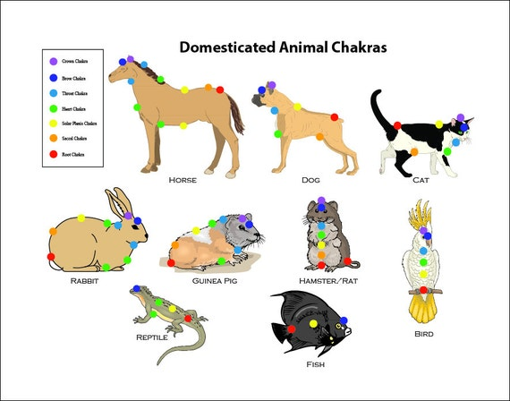 Y Horse Names 7 Chakra Animal Pet Ch...