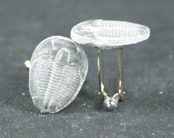 Trilobite Fossil Cufflinks No. 14  Free Cufflink Box By Cufflinked