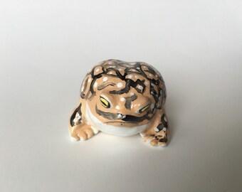Adorable Mustachioed Desert Rain Frog