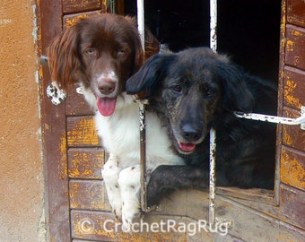 Black withe Dog Digital Photography, Digital Download Photography, Dog Lover, Pet photography,