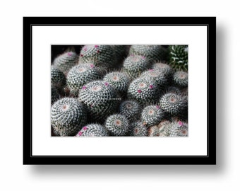 Color print, Twin-Spined Cactus, Chicago Botanic Garden