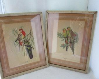 J Gould Colorful Bird Lithographs in Faux Bamboo Frames Bird print Avian art Gould print pair of birds Bird picture Gould bird pictures pair